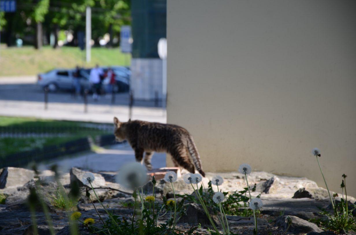 cat in city